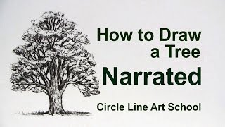 How to Draw a Tree: Oak Tree