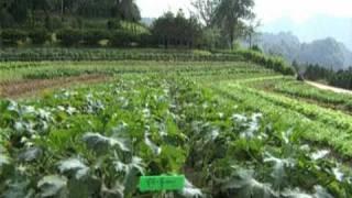 Farm, Thailand by Asiatravel.com