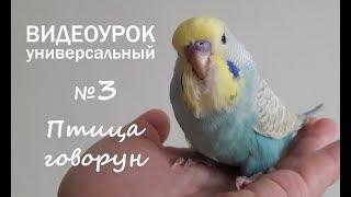 """Учим попугая говорить. Урок 3: """"Птица говорун"""""""