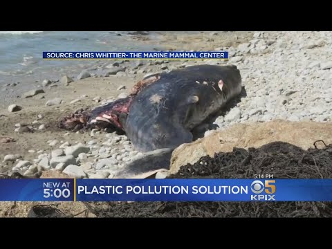 Scientists Discover Enzyme That Breaks Down Plastics Pollution In Ocean