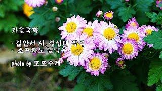 가을국화/김안서 시, 김성태 작곡/소프라노 남덕우 & photo by 모모수계