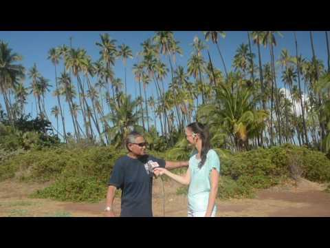 Molokai's Kapuāiwa Coconut Grove