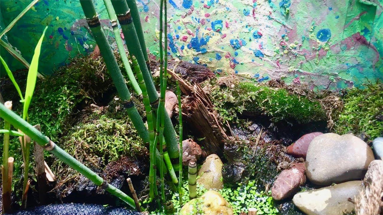 Kleiner Prinz - Jungfrosch auf Futtersuche