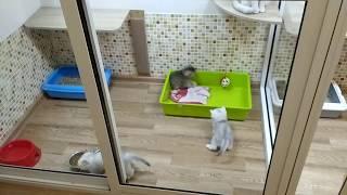 Котятам 1 месяц. Котоясли )) / комнаты для котят в питомнике