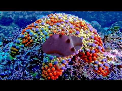 Various Starfish (HD1080p)