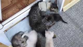 36 Мои котики