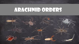Defining Characteristics of the Arachnid Orders