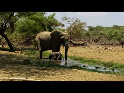 New baby elephant discovers water for the first time!