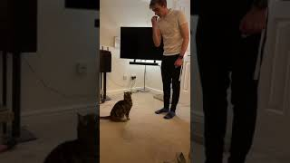 I trained my cat to do tricks (and it went viral…)