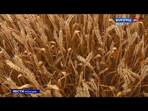 Сельхозпредприятия Волгоградской области оформляют документы на получение погектарной поддержки