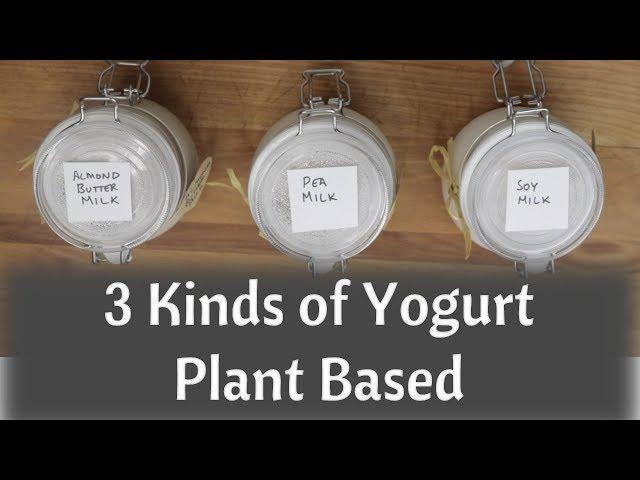 Dairy Free Yogurt - Almond Milk Yogurt - Soy Milk Yogurt - Pea Protein Milk Yogurt - Vegan