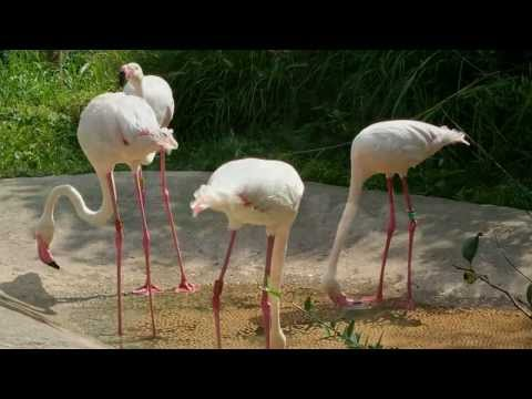 Cincinnati Zoo | USA Travel Tourism | Ohio Attractions | Thing To Do In Cincinnati # 2