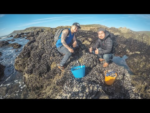 Central Coast Mussels & Uni Foraging During Low Tide