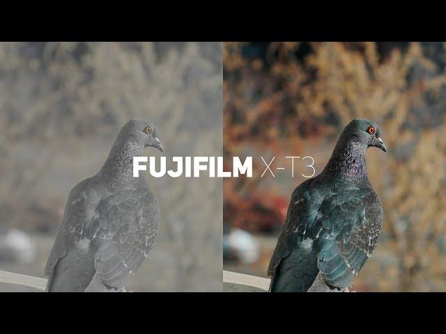Fujifilm X-T3 F- LOG 10bit