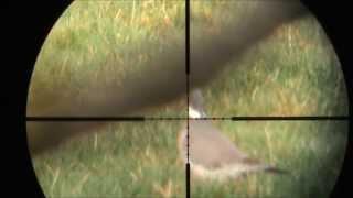 Air Rifle Hunting - Pigeons with Hatsan at44-10