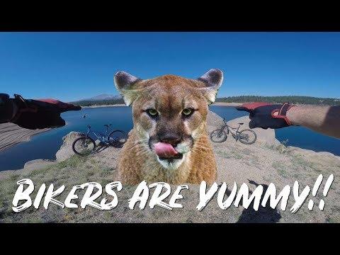 Mountain Biking Rampart Reservoir With A Big Cat Alert! Colorado MTB
