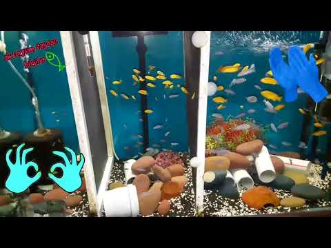AKVARYUM FON DEĞİŞİMİ, Akvaryum Balıkları, Aquarium Glass Background