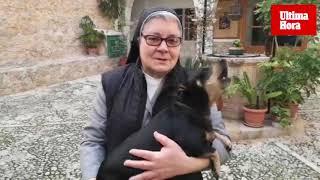 Lucero, el perro cantante