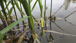 Ловля карася на СОБСТВЕННОМ ПРУДУ.Рыбалка на поплавочную удочку.  Рыбалка на собственном пруду.