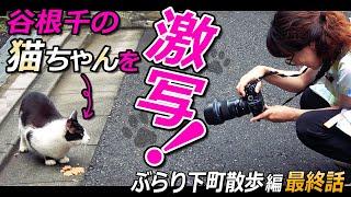 """東京の下町・谷根千エリアをブラブラするぶらり下町散歩編も 本日で最終回♪最後の撮れ高は、猫の街としても有名な""""谷根千""""らしく 「ネコちゃん!でしょ!」と猫を探して ..."""