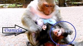 So Much Pity ! Because Mom Was Attacked , Baby Macci Confuses Mom & Was Mistreated