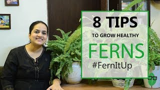8 Tips for Growing Healthy Ferns  Indoor plants  Fern care  Gardening Tips