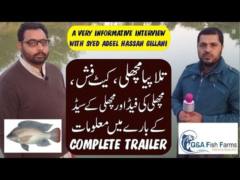 Tilapia Fish, Cat Fish, Availability Of Feed And Seed.Trailer. Video 26