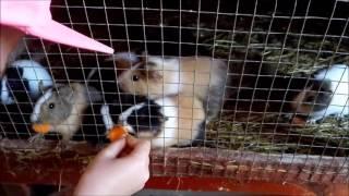 Moara de vant-parc zoo Cluj