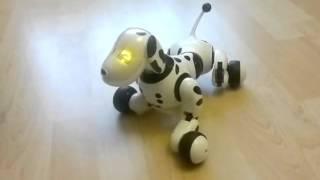 Обзор на собаку-робота далматинца Zoomer-Зумер