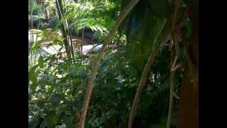 Download Video BOHAY MANDI DI KALI...HOOOTTT... MP3 3GP MP4