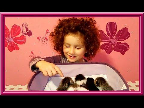 🐾 Котята подросли - конкурс на лучшее имя для котенка! Победителю - шоколадка:) Close/Закрыт.