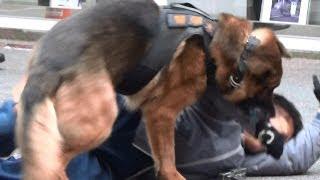 警備犬展示訓練 警察博物館
