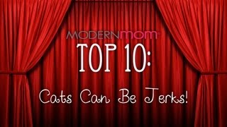 Cats Can Be Jerks - ModernMom Top 10