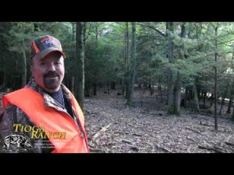 Wild Boar Hunts In PA - 500 Lb Russian Boar Kill | Tioga Ranch