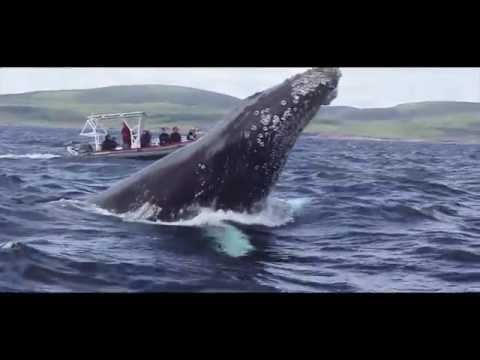 Marine Life  | Ocean Quest - Come Discover our World