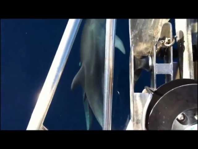 Caro delfino perdonaci. gruppo dintervento giuridico onlus