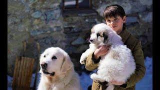 Белль и Себастьян: Друзья навек - Русский трейлер 2018