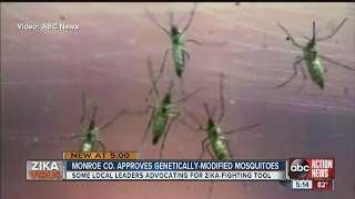 Fighting Zika with GMO mosquitoes could start soon in Florida