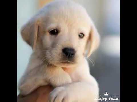 Cute puppy photo, WhatsApp status video, small dog
