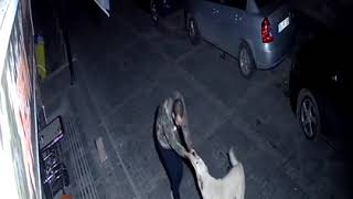 Drunk Guy Dances with Stray Dog in the Middle of the Night  10763532