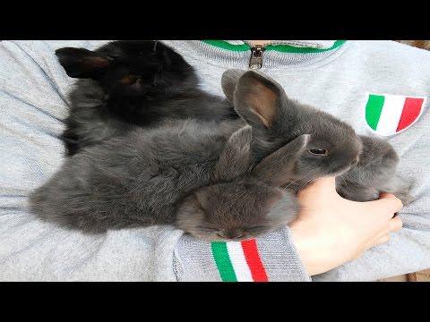 вакцина геморрагические заболевания кроликов инструкция