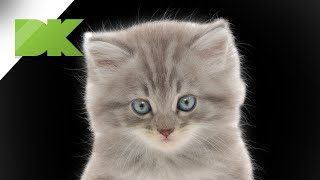 How to isolate a hairy cat from the background in Photoshop - Tutorial 23
