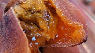 곶감 햇곶감 제철음식 …