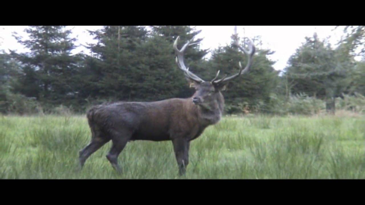 Partie de chasse en sologne 1979 - 1 part 4