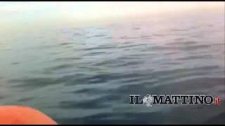 Tiberio, il delfino in trappola. Nuovo avvistamento sullo sfondo di Capri