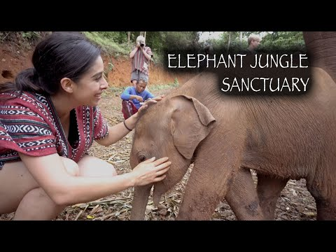 elephant-jungle-sanctuary-|-chiang-mai,-thailand