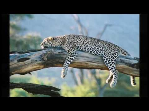 Kenya  Top 10 Tourist Attractions   Video Travel Guide