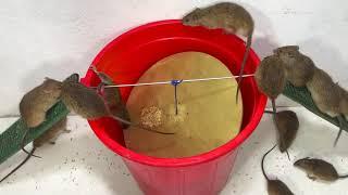 Top 10 Electric Rat Traps 🐀 Best Idea Electric Mouse Trap Water 🐭 #05