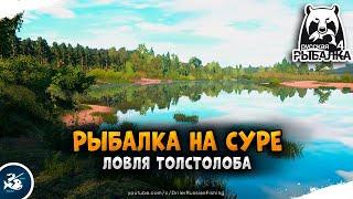Русская Рыбалка 4 Рыбалка на реке Сура Ловля Пестрого Толстобобика