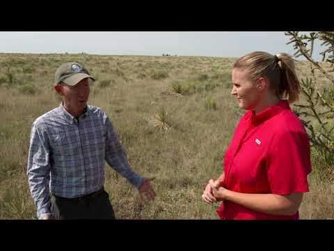 Northwest Oklahoma's Rich Plant Diversity